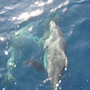 Riviera del Corallo – alla ricerca dei delfini - Foto 1